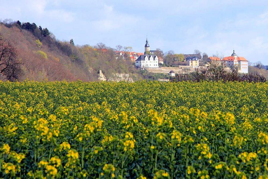 Dornburger Schlösser und Rapsfeld