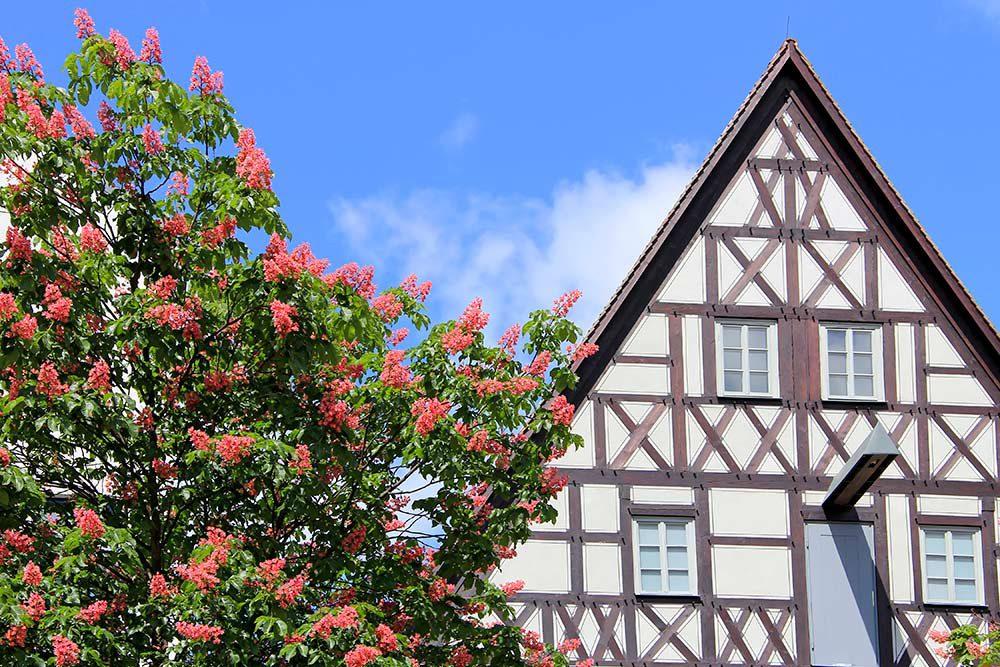 Frühling in Jena